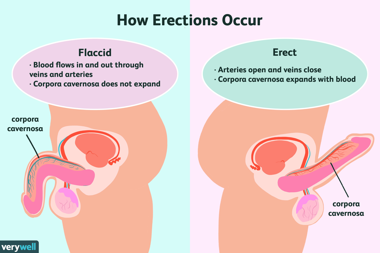 tipuri de penisuri erecți