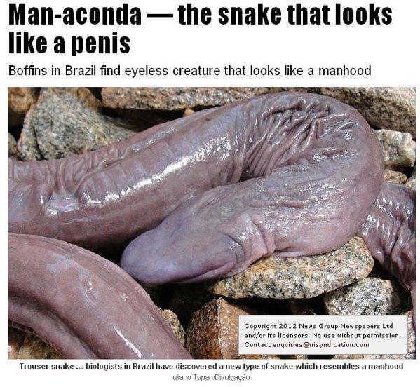 șerpii au penis