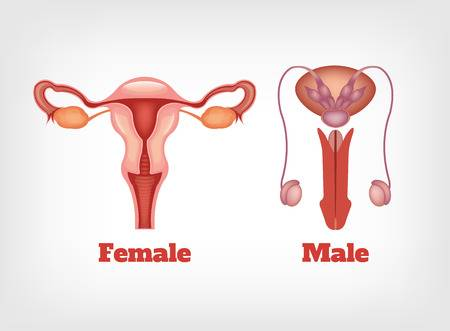 exerciții de îmbunătățire a erecției