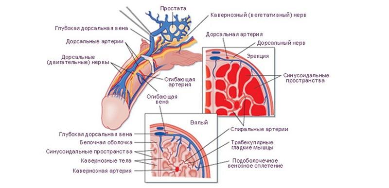 Disconfort in partea dreapta deasupra penisului | formatie-de-nunta-coral2.ro