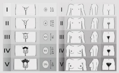 Organele genitale vizibile ale bărbatului   Zanzu