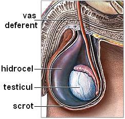 cu o erecție, penisul crește în timp Am 20 de ani și penisul nu crește
