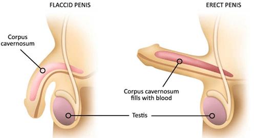 arata spre baza penisului