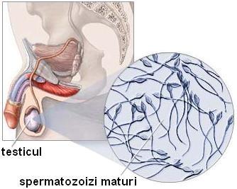 cauzele unui penis moale