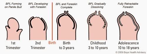 de la cât de vechi poate crește un penis