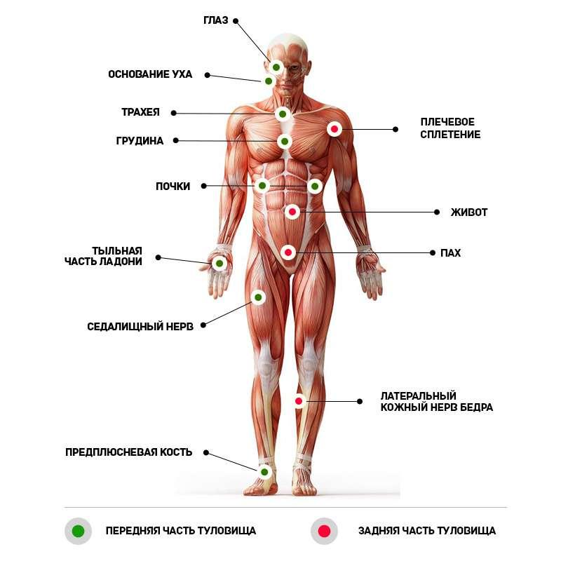 puncte pe corp pentru a îmbunătăți erecția umană ajută atașamentele penisului