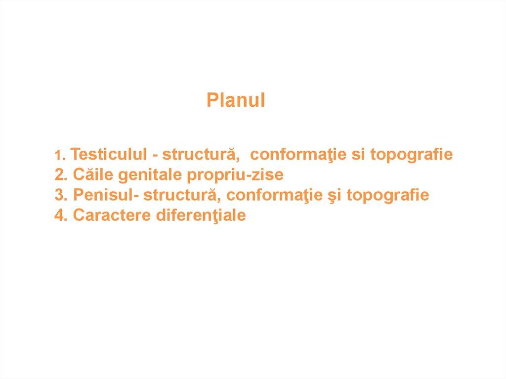 Anatomia penisului
