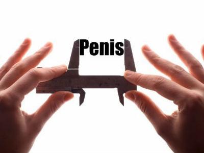 starea calmă a penisului este